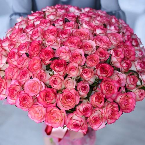 101 роза Jumilia