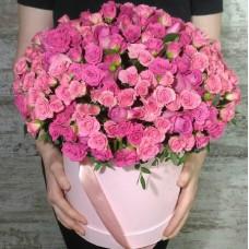 Кустовая роза Lovely Lydia MIDDLE