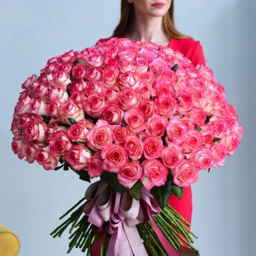 201 роза Jumilia