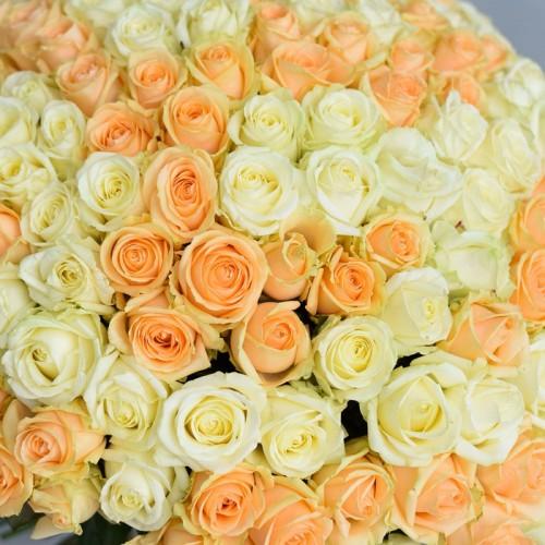201 персиково-белая роза