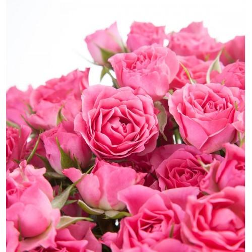 21 веточка кустовой розы Lovely Lydia