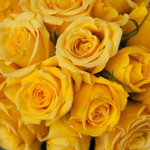 Коробка с оранжевыми розами SMALL