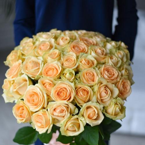 Роза Pich Avalanche