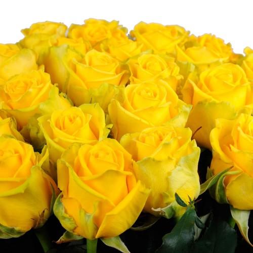 21 оранжевая роза